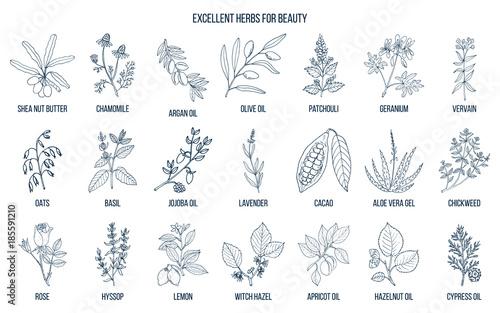 Fotografie, Obraz  Best herbs for beauty.