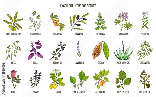 Valokuva  Best herbs for beauty care