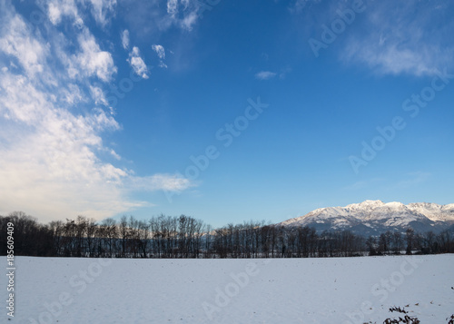 Winter snow covered landscape of bare trees in symmetrical row with Italian Alps Canvas Print