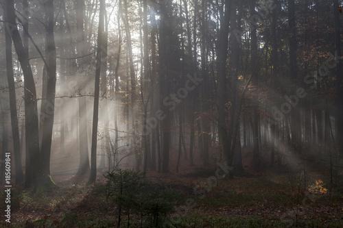 Fototapeten Wald Wald in Kärnten