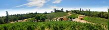 View Of Vineyards In The Sierr...