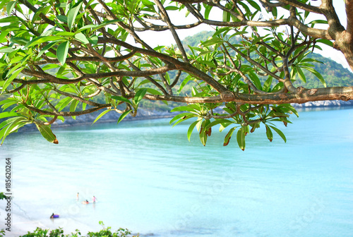 Branche and leave tree with background blue sea, Si-chang island, Thailand.