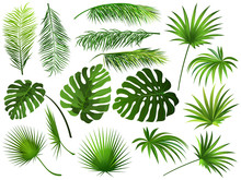 Tropical Green  Leaves (coconu...