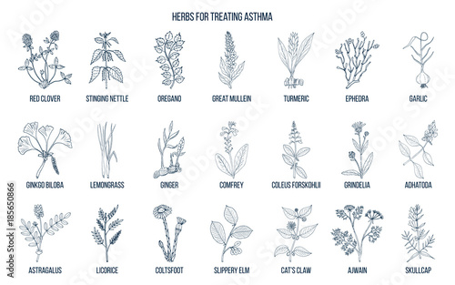 Natural herbs collection for asthma treating Canvas-taulu