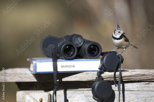 Fotografía  Tit bird with binoculars and ornithology field guide