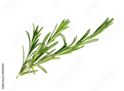 Tablou Canvas a branch of rosemary