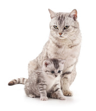 Mom Cat And Kitten.