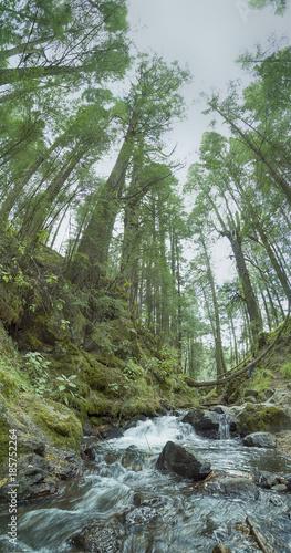 Foto op Aluminium Rivier Bosque Parque Nacional Izta-Popo