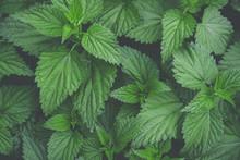 Botanical Foliage Background O...