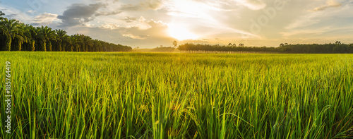Foto auf Gartenposter Landschappen Rice field with sunrise or sunset in moning light