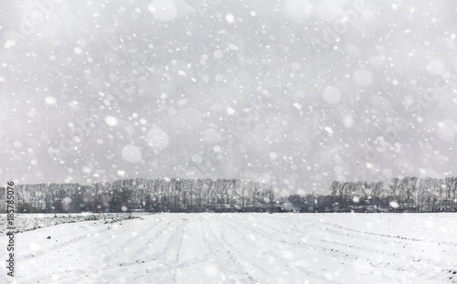 Winter forest. Landscape of winter forest on a sunny day. Snow-c Wallpaper Mural