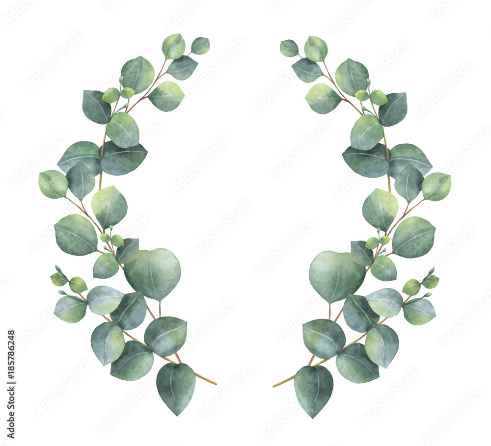 Fototapeta Watercolor vector wreath with silver dollar eucalyptus leaves and branches.