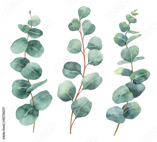 Watercolor Hand Painted Vector Set With Eucalyptus Leaves