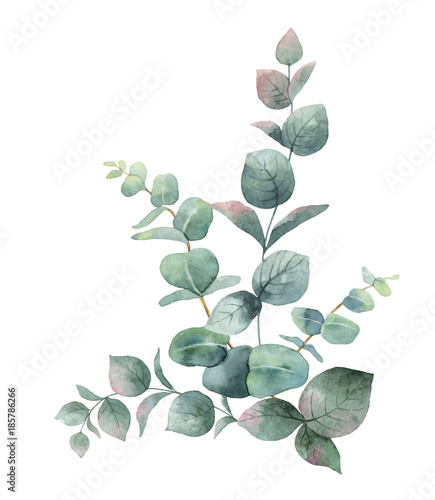Watercolor vector bouquet with green eucalyptus leaves and ...