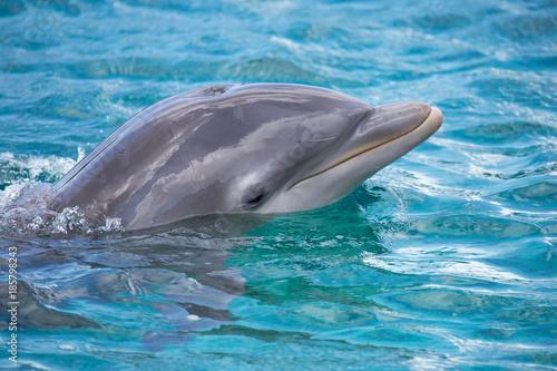 Foto op Canvas Dolfijn Hübscher Delfin-Kopf