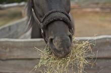 A Closeup Picture Of A Horse M...
