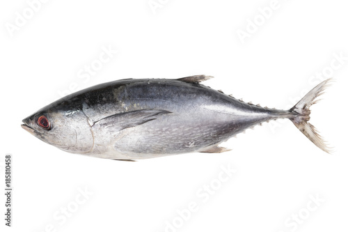 Photo Tuna fish isolated on white background with clipping path
