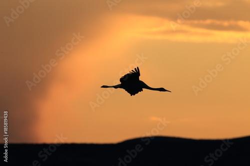 Papiers peints Orange eclat Sandhill Crane Bosque del Apache Wildlife Reserve New Mexico USA