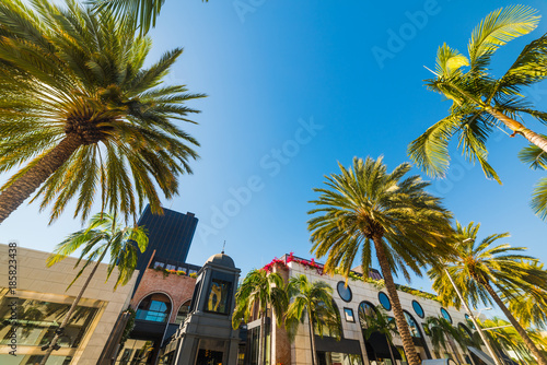 Poster Los Angeles Palm trees in Beverly Hills