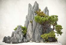Chinese Bonsai, Located In Suz...