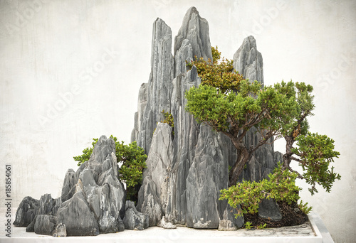 Chinese bonsai, located in Suzhou City, Jiangsu Province, China.