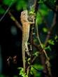 small lizard on tree