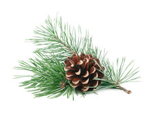 Pine Tree Branches With Cones Isolated On White Background. Winter Holidays Decoration. Evergreen Tree.