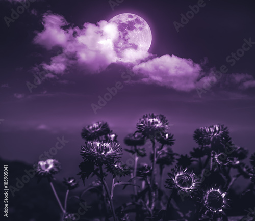Fotobehang Aubergine Nighttime sky with clouds and full moon with shiny.