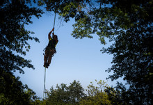 Tree Worker Climbing To Cut Br...