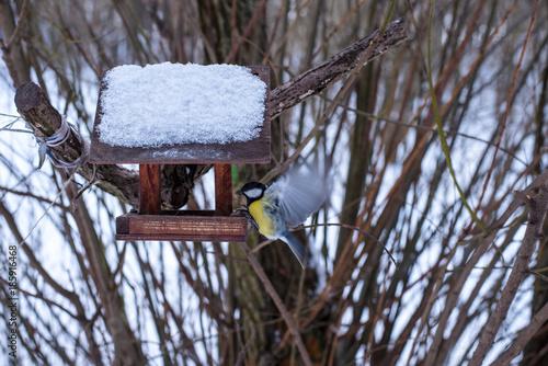 Fototapeta premium Blue tit (Cyanistes caeruleus) at the bird feeder in winter