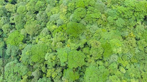 Cadres-photo bureau Olive Tropical Forest