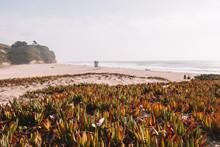 Amazing Cliff Sand Coastline N...