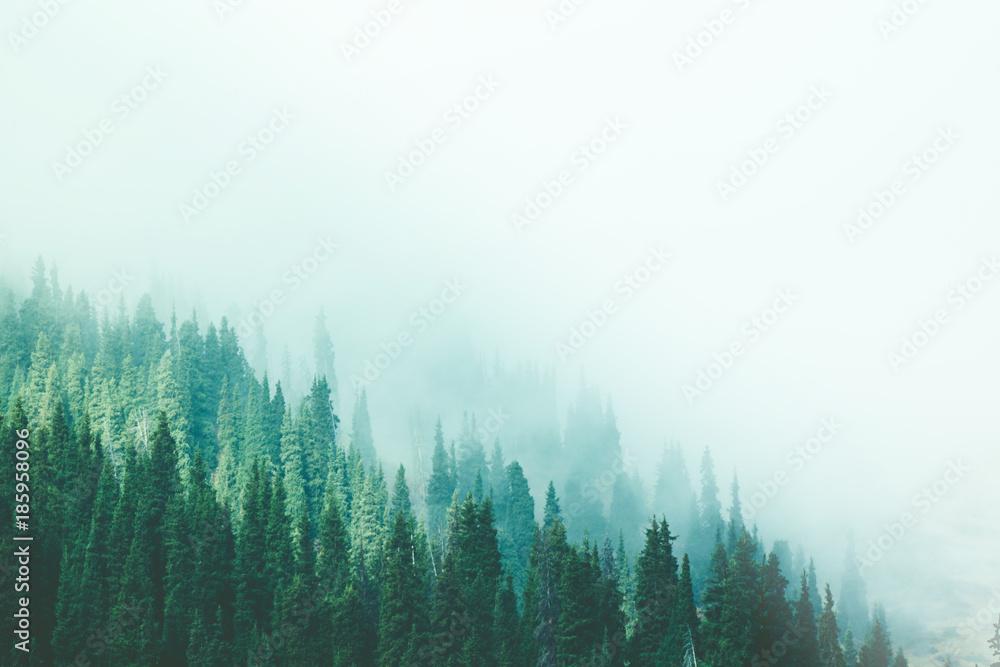 Misty fog pine forest mountain slopes color toning