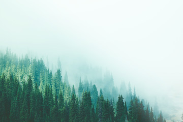 Fototapeta Do sypialni Misty fog pine forest mountain slopes color toning