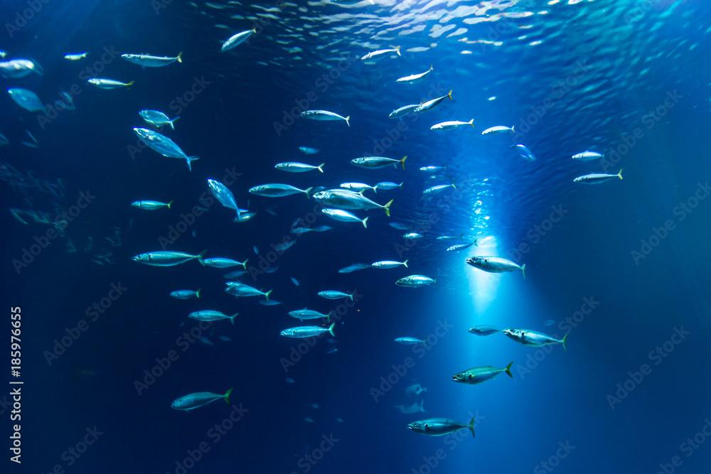 Fototapeta Fischschwarm im Aquarium