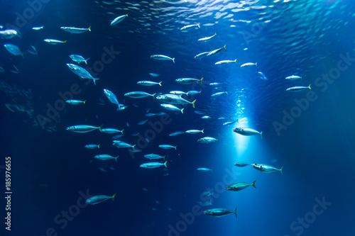 Fischschwarm im Aquarium