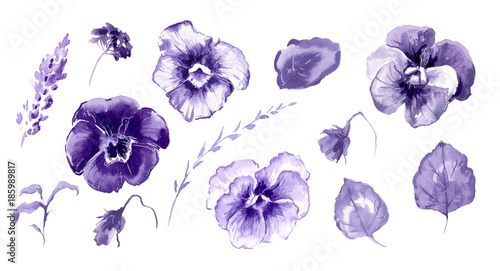 Hand drawn watercolor illustration African Violet Flowers Fototapeta