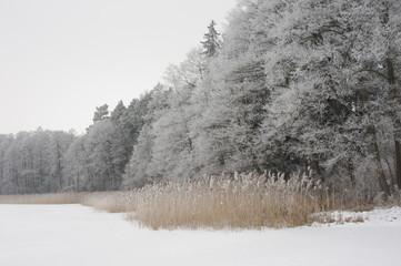Fototapeta Inspiracje na zimę Polish lake in winter landscape. Podlasie.