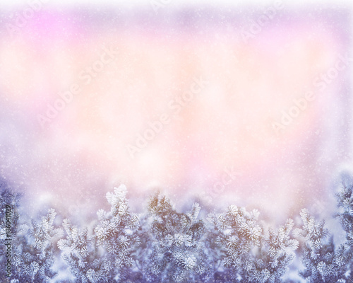border winter nature christmas background with frozen spruce branch with glitter lights bokeh snow