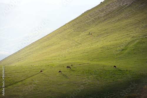 Horses in the fields at sunset, Monte Cucco Park, Apennines, Umbria, Italy, Europe