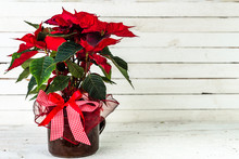Red Poinsettia, Christmas Flower, Table Decoration On Rustic Wooden Background