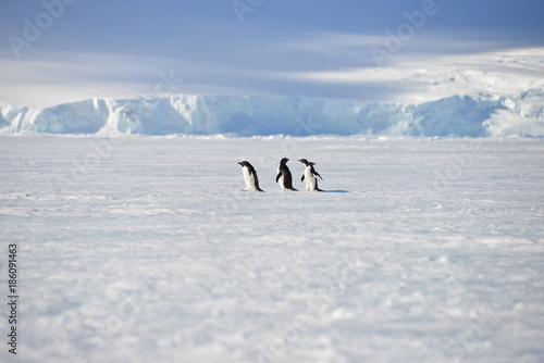 Door stickers Antarctic Antarctica pinguins sky