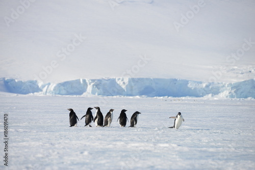 Antarctica animals pinguin