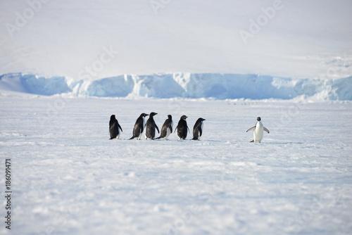Antarctica pinguinos