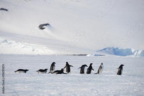 Antarctica group penguins
