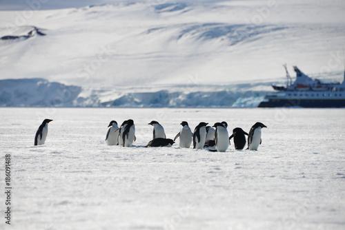 Spoed Foto op Canvas Antarctica Antarctica pinguins
