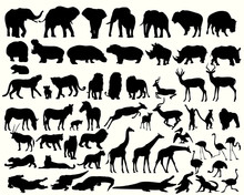 Collection Of Different Animal...