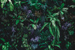 Leinwandbild Motiv Beautiful nature background of vertical garden with tropical green leaf
