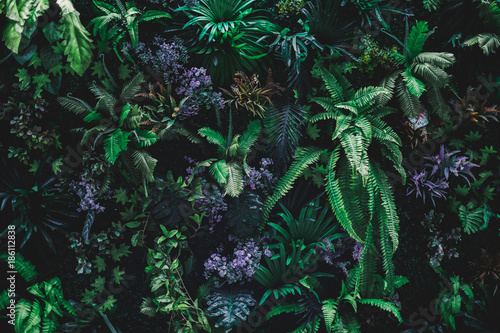 Foto  Beautiful nature background of vertical garden with tropical green leaf
