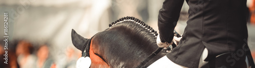 Horse dalbies photographed from behind in the dressage over the neck, with plaited braids.